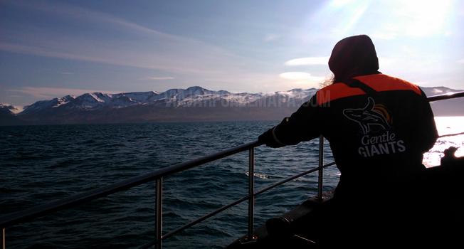 islandia ballenas gentle giants