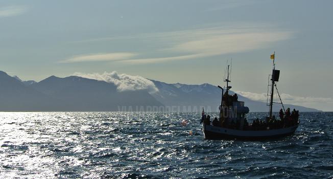 avistamiento ballenas islandia