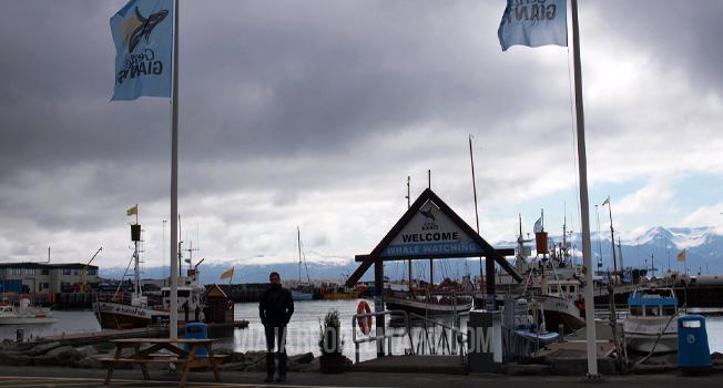 islandia gentle giants husavik