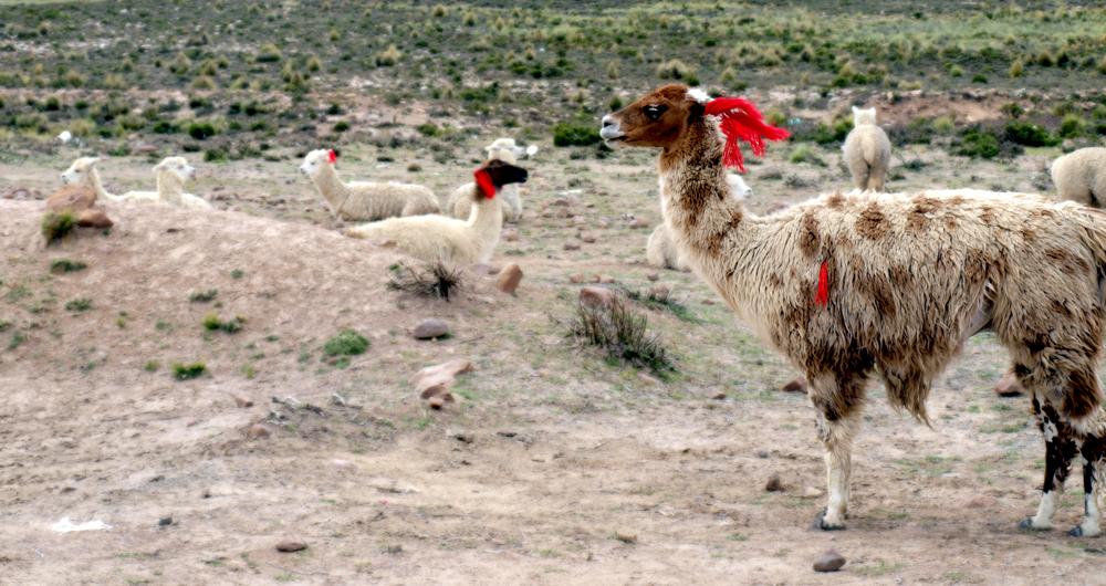 itinerario viaje Perú 15 días