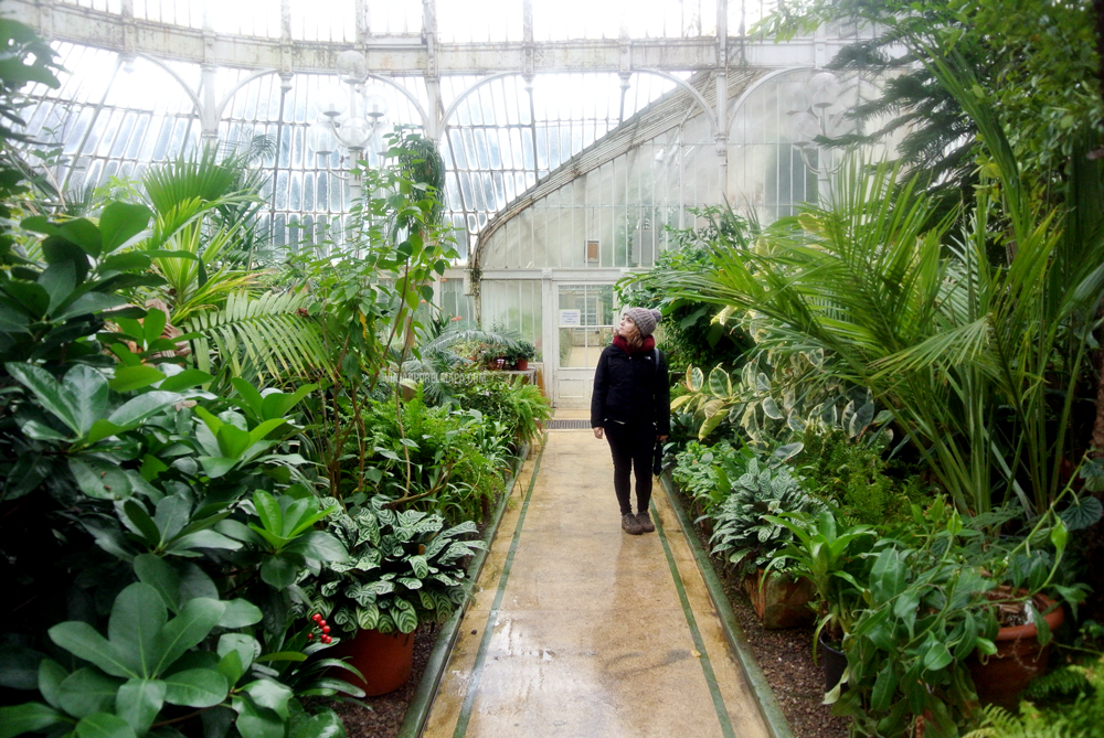 The Palm House Belfast